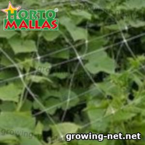 vertical system support with  trellis net in crops