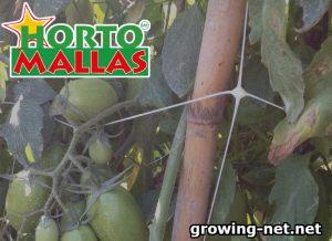 Growing net